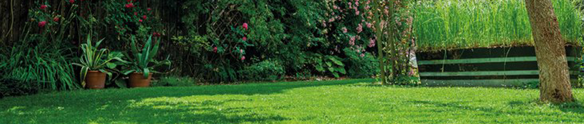 Outdoor & Gardening